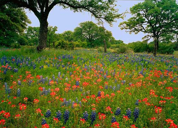 Relocation To Fredericksburg Texas Homes Tx Homes And