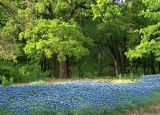 Fredericksburg Texas Hill Country