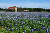 Fredericksburg TX homes