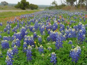 Fredericksburg Texas homes bluebonnets